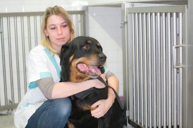Clinique veterinaire ophtalmologie grenoble isere pour chien chat animaux - Cabinet ophtalmologie grenoble ...